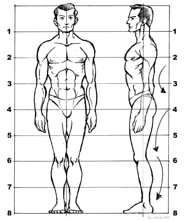 proporzioni_uomo