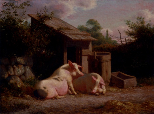 pigs_in_a_farmyard-large