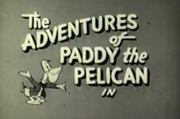 Paddy_the_pelican.png