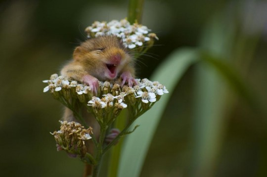 Funny-Flowers-13.jpg