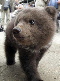 baby-bear-2401.jpg