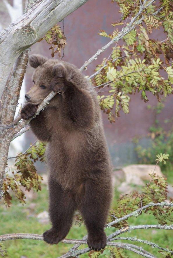 little_bear_by_nanokii-d47rg3c.jpg