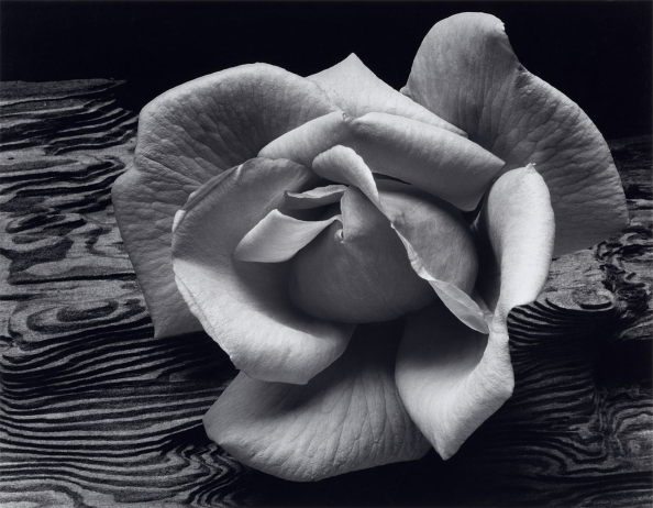 Rose-and-Driftwood-1617x1260.jpg